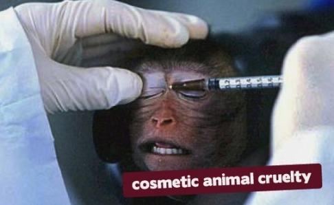 Procter gamble тесты на животных canada legislation online gambling